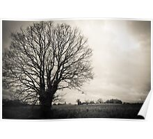 Tree and Fields Poster