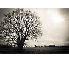 Tree and Fields Photographic Print