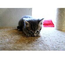 Tiny Catnips Photographic Print