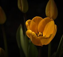 Spring is just around the corner..... by Poete100