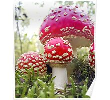 Toadstool Treat Poster