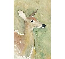 Whitetail Deer no.1  watercolor Photographic Print