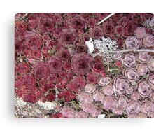 Stonecrop on a Granite Boulder Canvas Print