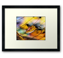 Plain Stain in a Natural Pane Framed Print