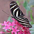 Striped Beauty - Butterfly by MTBobbins