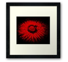 Bee On A Red Flower Framed Print