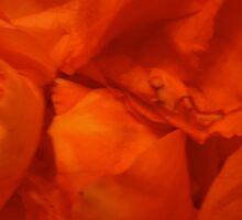 Scattered petals Sticker