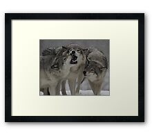 Family Squabble  Framed Print
