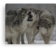 Family Squabble  Canvas Print