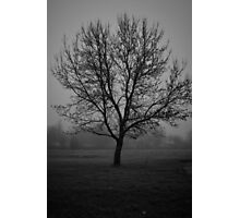 A Foggy Tree in Black and White Photographic Print
