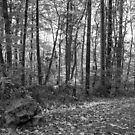 The Driveway In Autumn - Black and White by MotherNature2