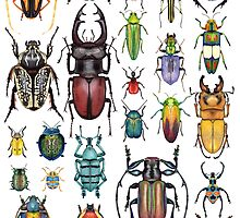 Beetle Collection by Kelly Jade King
