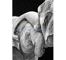 A Gentle Touch - Affectionate Elephants Photographic Print