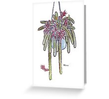 Rattail Cactus sketch Greeting Card