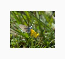 Common Blue Butterfly Unisex T-Shirt