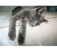 Russian Grey Cross Tabby Cat Photographic Print