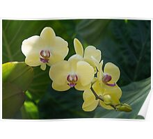 Pale Yellow Orchids in Lush Jungle Green Poster