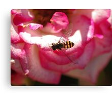 Hover Fly in the Pink Canvas Print