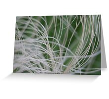 Abstract Image of Tropical Green Palm Leaves Greeting Card