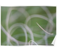 Abstract Image of Green Palm Leaves  Poster