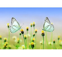 Butterflies Spring Nature Scenery Photographic Print