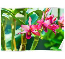 Tropical Impressions - Vibrant Pink Orchids Poster