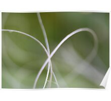 Macro of A Green Palm Tree Leaf Poster