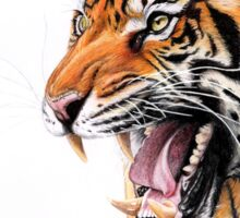 Angry Roaring Wild Tiger Sticker