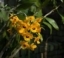 Exotic Orchids - Bright Yellow Smileys  by Georgia Mizuleva