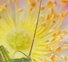 Speckled Bush Cricket Nymph on Wild Rose Sticker