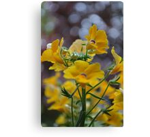 yellow flowers and bokeh Canvas Print