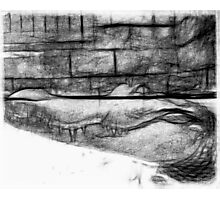 Black and white Pencil Sketch of an Alligator  Photographic Print