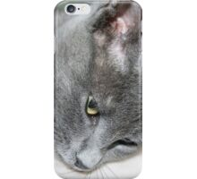 Close Up Of A Grey Kitten iPhone Case/Skin