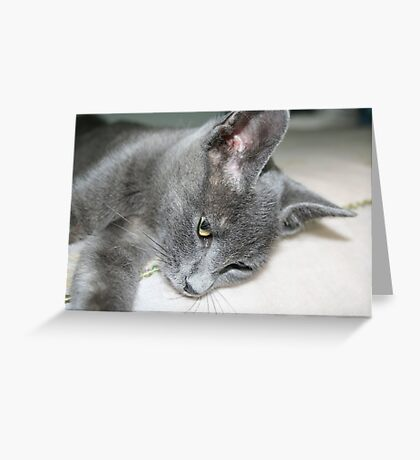 Close Up Of A Grey Kitten Greeting Card