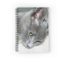 Close Up Of A Grey Kitten Spiral Notebook