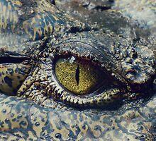 Crocodile by Marc2395
