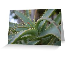Aloe Vera Leaves  Greeting Card
