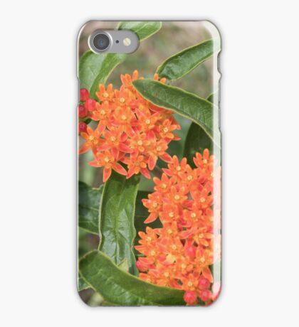Wildflower: Orange Butterfly Weed iPhone Case/Skin