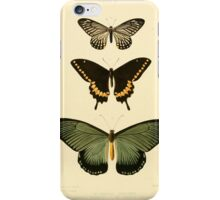 Illustrations of new species of exotic butterflies  (Papilio VI) iPhone Case/Skin