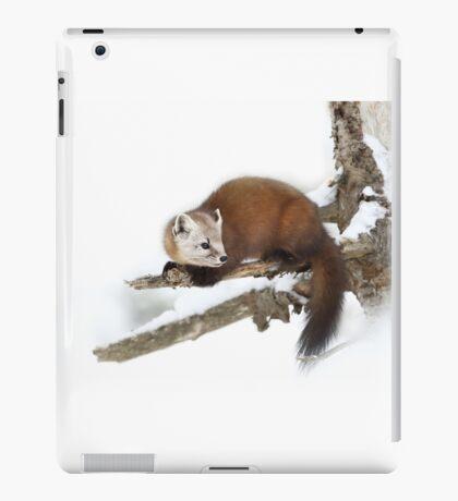 Pine Marten - Algonquin Park iPad Case/Skin