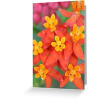 Succulent Red and Yellow Flower Echeveria Greeting Card