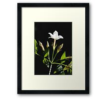 Close Up Of Jasminum Officinale Isolated On Black Framed Print
