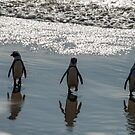 African Penguins, South Africa by Erik Schlogl
