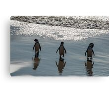 African Penguins, South Africa Canvas Print