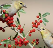 Goldfinches in Yaupon Holly Tree Sticker