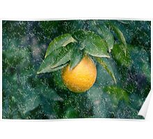 Digitally manipulated rain on Ripe orange on a tree before picking  Poster