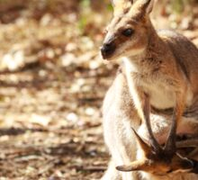Whiptail Wallaby & joey Sticker