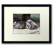 Playful Otters Framed Print