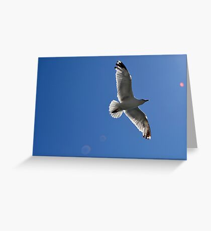 Blue skies and sea birds  Greeting Card