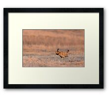 Prairie Chicken 2013-14 Framed Print